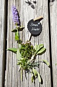 Various bee-friendly herbs with hand-made plant label