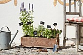Herbs planted in wooden crate with plant labels