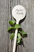 Mojito mint and wooden spoon used as plant label