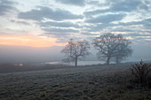 Trees in misty meadow at sunrise