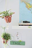 Succulents in terracotta pots in macrame pot hangers