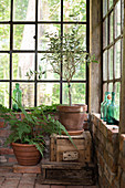 Potted plants in rustic orangery