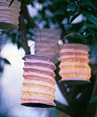 Paper lanterns hung in bush