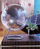 Transparent globe next to potted succulent on dark wooden surface
