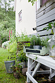 Kitchen herbs in fruit crate on potting table behind house