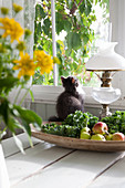 Cat sitting next to fruit bowl on table below window