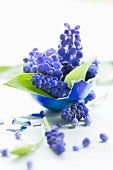 Posy of grape hyacinths and ramsons leaves in blue-painted Easter egg shell