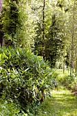 Bambuspflanze in der Natur