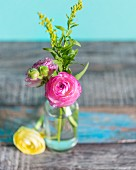 Delicate ranunculus in glass vase