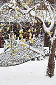 Snowy hammock hung from tree amongst yellow apples