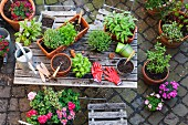 Verschiedene Heil- und Küchenkräuter und Gartenwerkzeuge auf Gartentisch