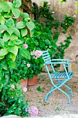 Blue garden chair next to large hydrangea in garden