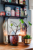 Leafy branch, houseplant and mirror on wooden surface below vintage storage jars on wall-mounted shelves