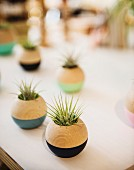 Small air plants in spherical planters