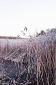 Frozen reeds next to frozen stream in wintry landscape