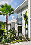 Palm trees and cacti in rock garden outside modern architect-designed house
