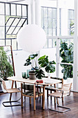 Monstera plant on the dining table with various chairs in the loft