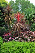 Tropical garden with exotic plants and flowers