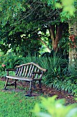 Rustic bench in the garden with exotic plants