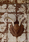 Hunting trophy with antlers on rusty metal shield on battered wall