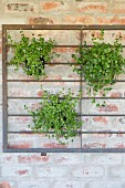 Potted plants attached to metal grille on brick wall