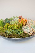 Various succulents planted in dish
