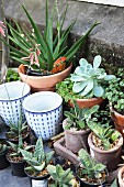 Various potted plants, succulents and planters