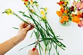 Blumenstiele von Freesien werden von mit Gartenschere gekürzt