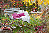 Bench with pillows and blanket under malus