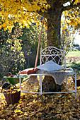 Baumbank unter Ahornbaum :
