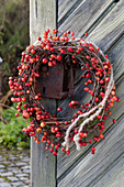 Wreath made of malus (ornamental apple) twigs with fruits