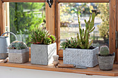 Gray boxes and pot with succulents and cactuses at the window