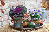 Brassica oleracea 'Pigeon Purple' (ornamental cabbage) and Viola cornuta