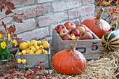 Freshly harvested Malus (apple), Chaenomeles (ornamental quince)