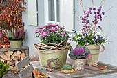 Chrysanthemum grandiflorum (Deco chrysanthemum), Callicarpa