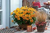 Chrysanthemum ( Herbstchrysantheme ) und Pennisetum ( Federborstengras )