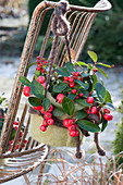Gaultheria procumbens 'Winterpearls' with felt lining