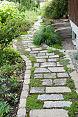Path made of natural stone slabs, joints overgrown with thymus