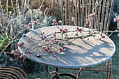 Frozen branch with pink (rosehip) on rust table