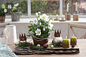 Helleborus niger in a rust pot, candles and Christmas baubles