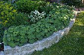 Flowerbed surround of Alchemilla mollis (lady's mantle) and granite