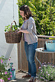 Planting basket with tomato and nasturtium