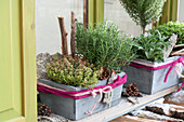 Herbs in wooden boxes in front of window