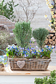 Basket with herb stems and blue spring flowers
