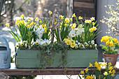 Narcissus 'Tete A Tete', Primula, Viola cornuta