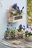 Viola cornuta 'Lavender Blush', Crocus vernus 'Striped Beauty'