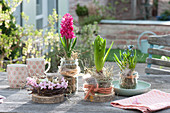 Easter Table Decoration, Hyacinthus 'Jan Bos' (Hyacinth), Muscari