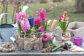 Hyacinthus 'Pink Pearl', 'Jan Bos', 'Delft Blue' in paper