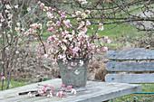 Fragrant Bouquet of Viburnum bodnantense 'Dawn'