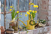 Spring at the stable window, Narcissus 'Tete A Tete' (Daffodil)